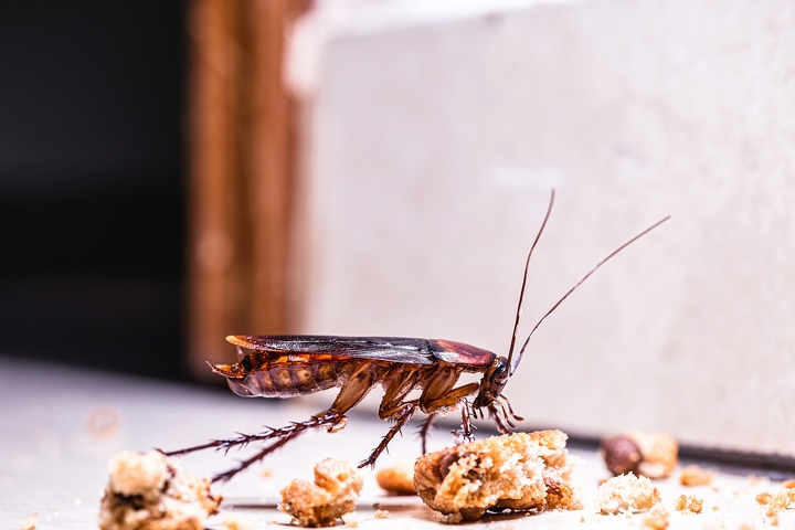 8 Types of Cockroaches and Where to Find Them